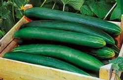 Sorteren van komkommers met RFID