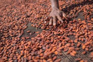 Supply chain Tony's Chocolonely transparanter met Beantracker